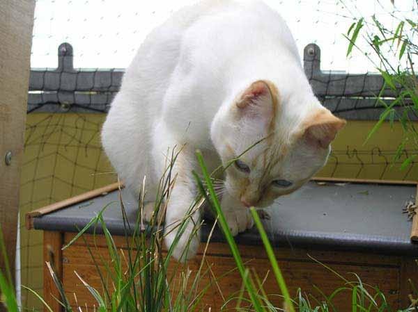 Gleich mal die Reisszwecke ausfahren und rumms, dann zappelt er am Haken!
