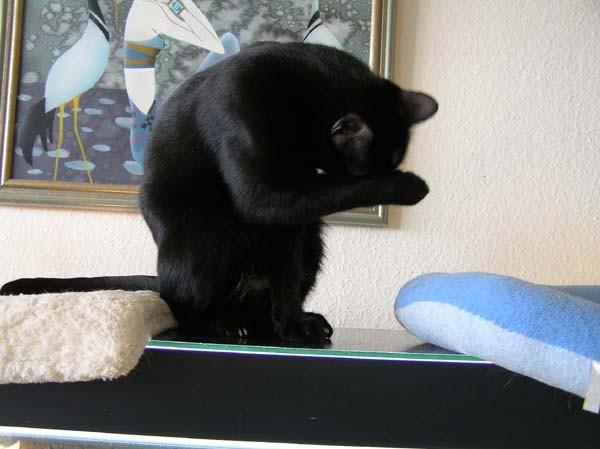 da schämt man sich Katze zu sein, echt...