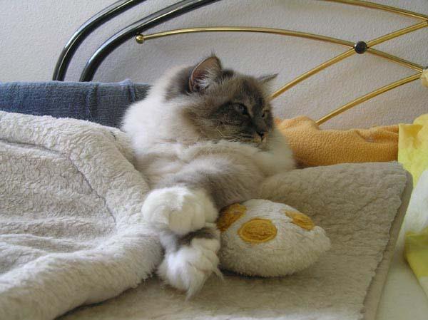 kaum liegt man entspannt im Bett, bereit für ein Nickerchen...
