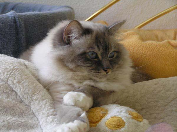 Spaniokel-Katzen sind echt nicht zum aushalten...