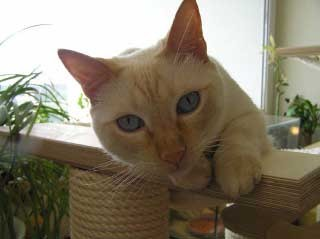 die uns Katzen mit Stäbchen auf den Geist geht...