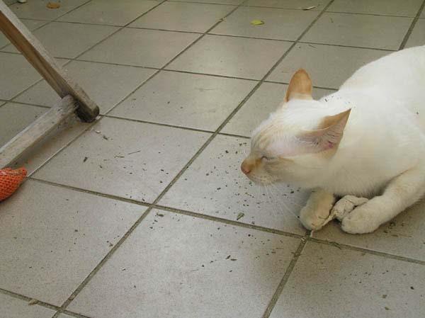 Da riecht es doch noch nach weiteren Mäusen!!!