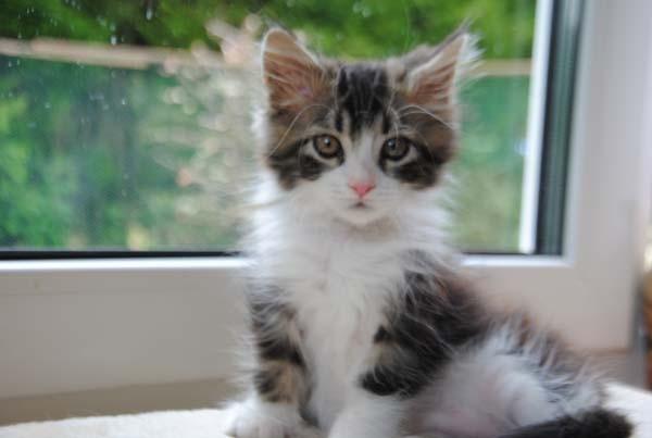 Kann denn so ein kleines, süßes Wesen wie ich jemandem wehtun????