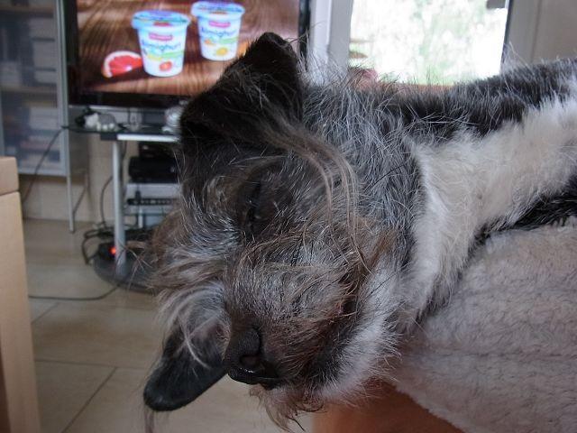Sofa, direkt bei Muttern in einem plüschigen Hundekörbchen...