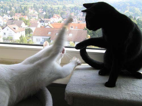 Schwarzarsch, nun mach schon... sonst bretter ich dir eine!