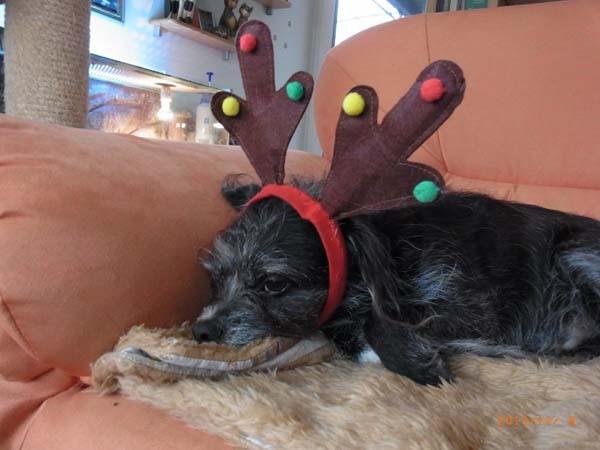 Ich gebe auf - von wegen Weihnachten, ein Fest der Liebe...