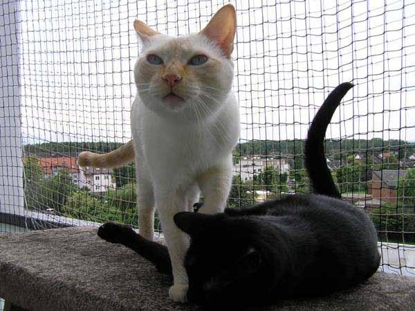 Woooaaaahhhh - ein brauner Brummer fliegt auf MEINEN Balkon!