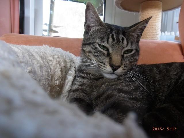Schon mal was davon gehört - das man Katzen nicht einfach im Schlaf ansprechen darf?