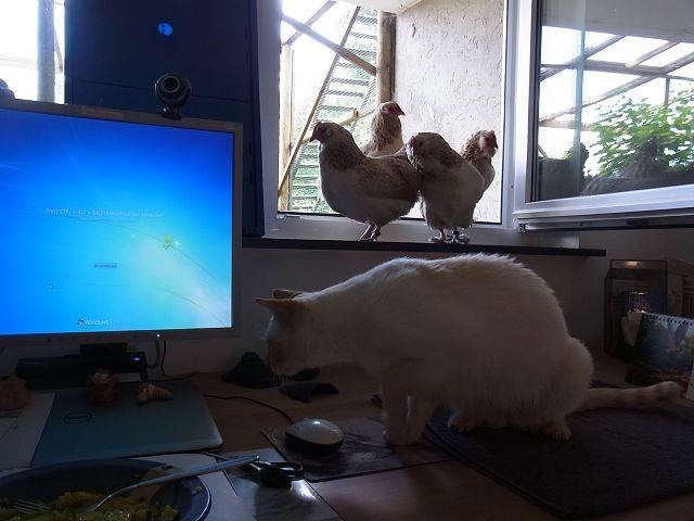 Woooahhhh, da ist ja ne Katze!