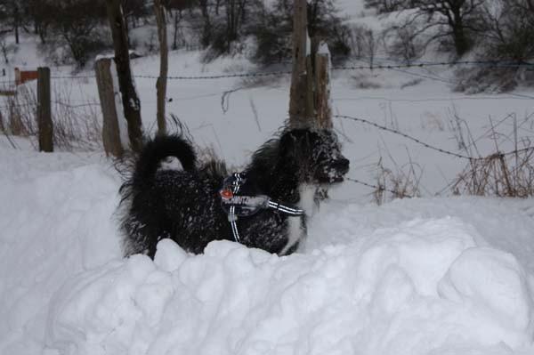 Nur Schnee, weißer Irrsinn und eine Affenkälte...