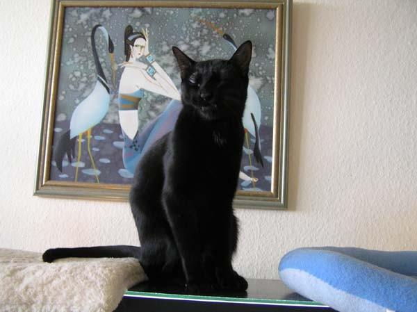 Hier ist Katzengott Gaivan, 2007 - einfach unerreichbar!!!!