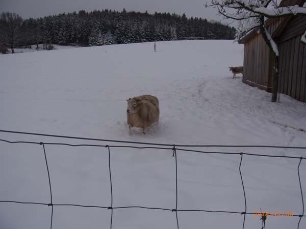Boooahhh - schon wieder ein komisches großes Tier...