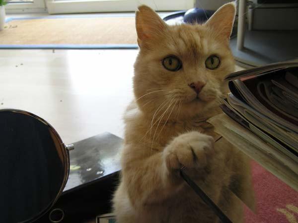 Gut Katzengott, ich mach genau was du mir befiehlst...