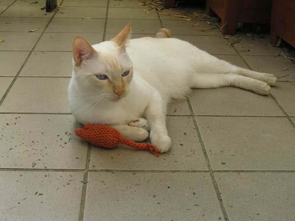 Aaaaahhh - Mouse a la Orange...!