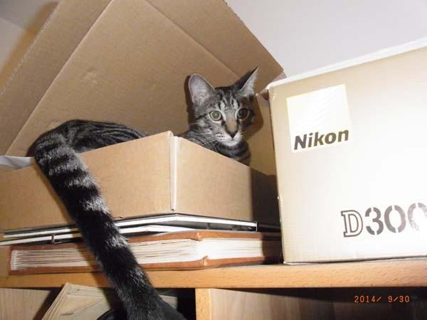 Ich habe ein geniales Versteck gefunden!