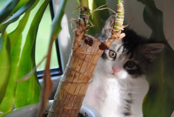 Hier ist Mogwai, der Kater aus dem Dschungel!