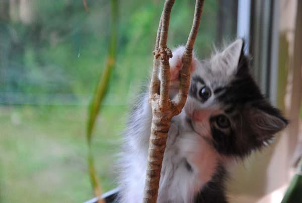 Dann gibt es noch einen weiteren Baum den ich erklimmen will!