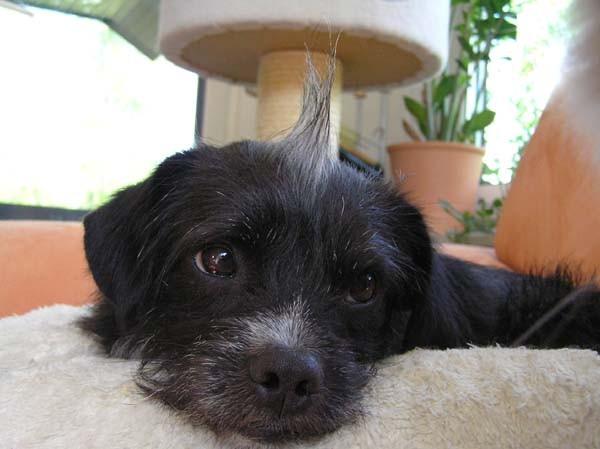 Diese Haarspitze auf dem Kopf ist unwürdig, einfach unwürdig...