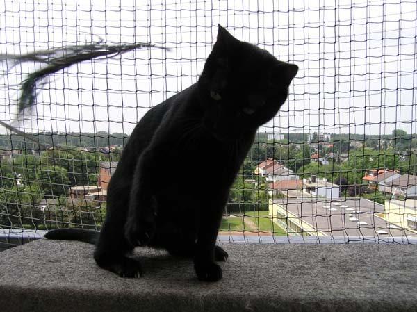 WOOOOAAAHHH nun ist das Ding auf den Balkon geflogen!