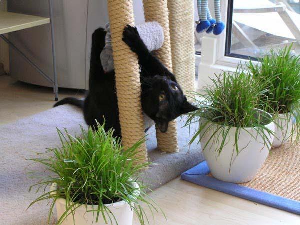 Ich krieg hier echt noch die Motten - das hält doch keine Katze aus im Hirn!