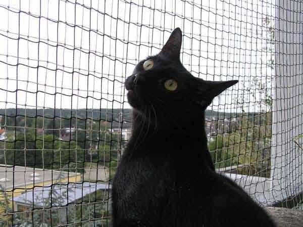 Herr der Katzen, schick mir eine Idee!