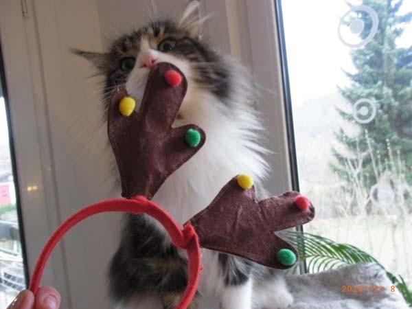 Hey Mama, wie Weihnachten und Geweih anziehn?????