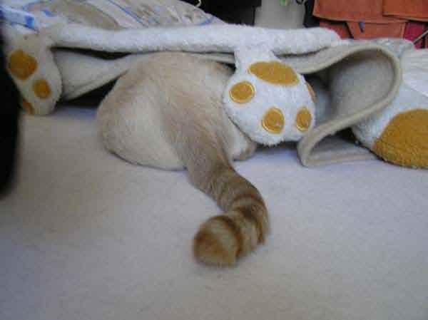 Noch nicht mal seinen gewohnten Mittagsschlaf kann man halten!