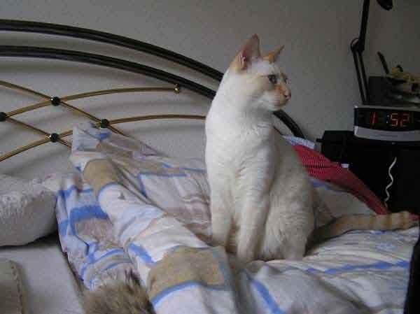 Aber nun zeig ich ihr mal - das Katzen IMMER Ideen haben...