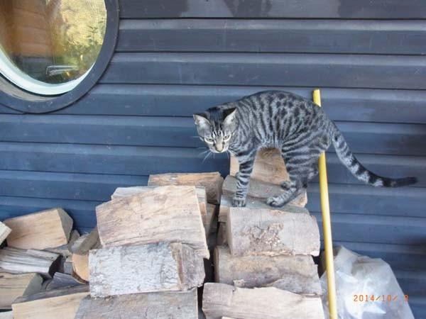 Erst mal das Holz erklimmen...