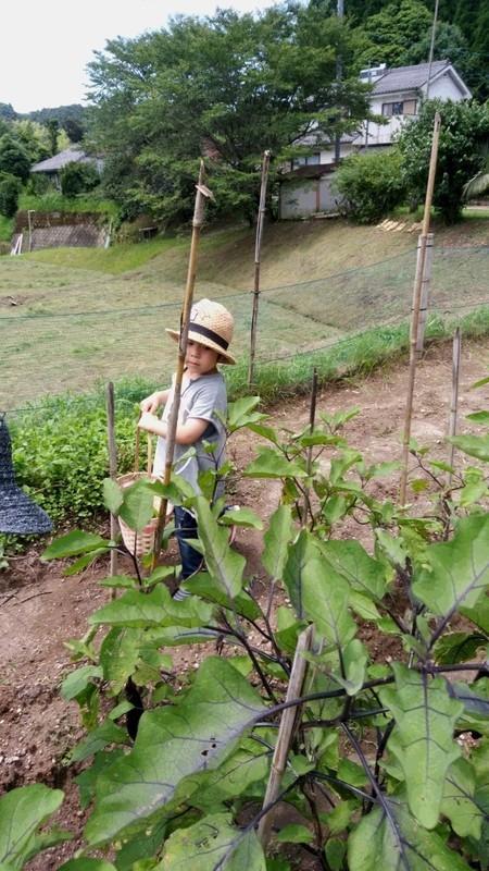 収穫中の子供の写真