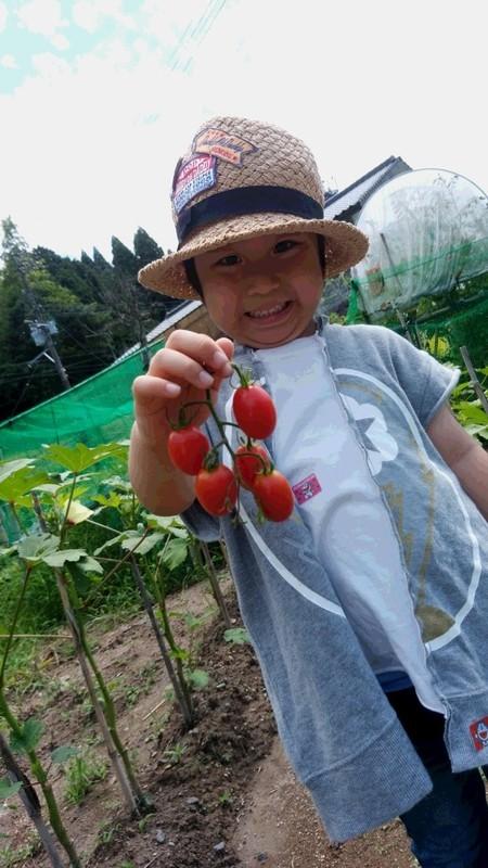トマトを持った子供の写真