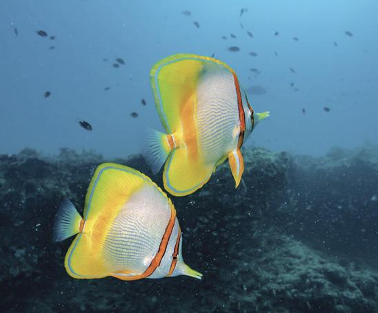 bunte Unterwasserwelt im Ningaloo Reef                                                            © Exmouth Dive and Whalesharks Ningaloo