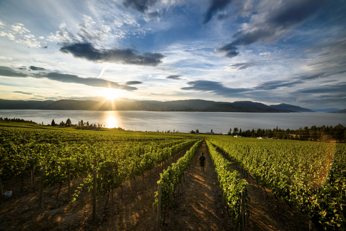 Weingut am Okanagan Lake