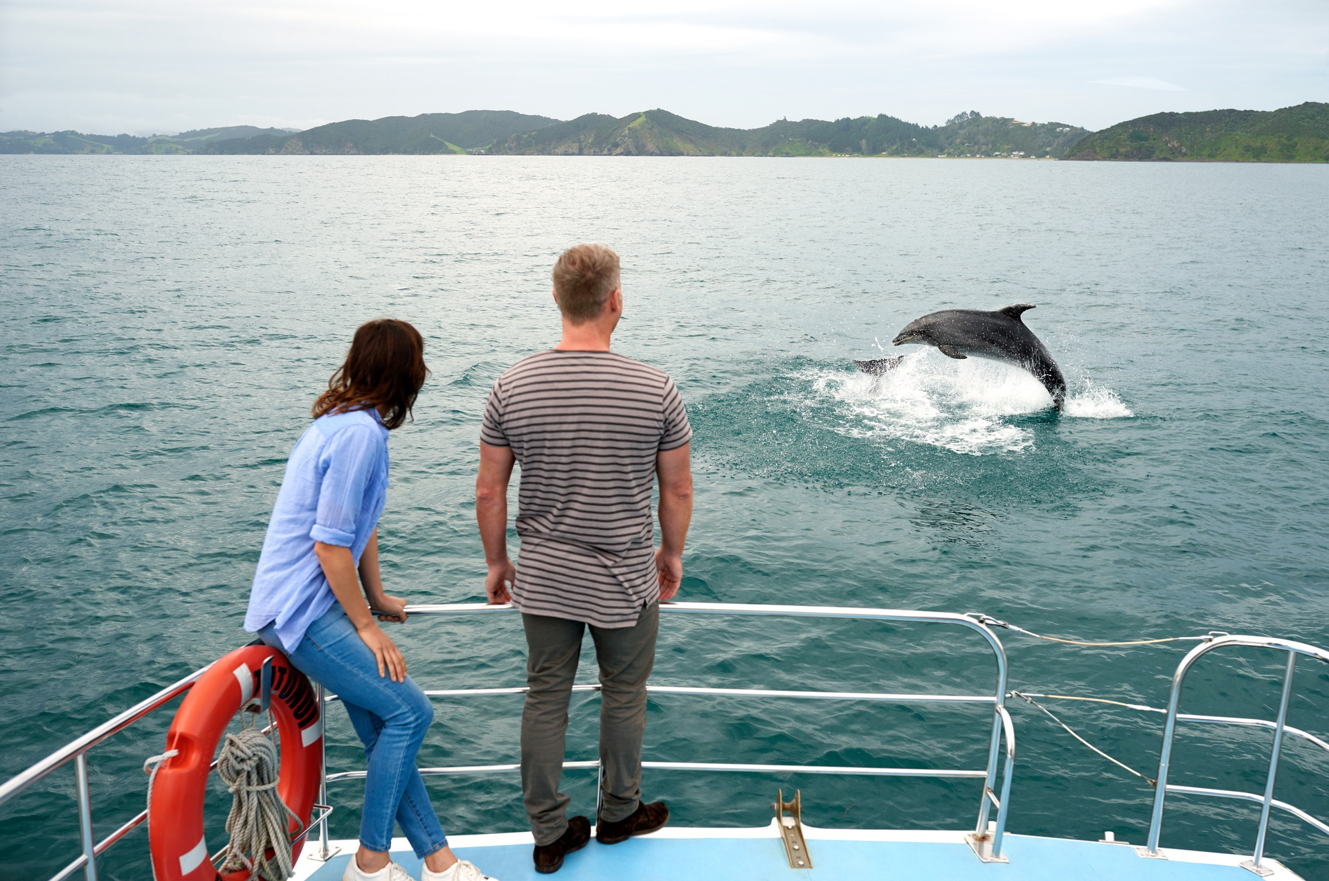 Delfin Whatching, Bay of Islands, Nordinsel © Fraser Clements