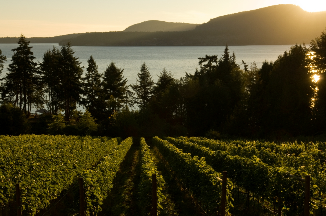 Morning Bay Vineyards, North Pender Island, BC