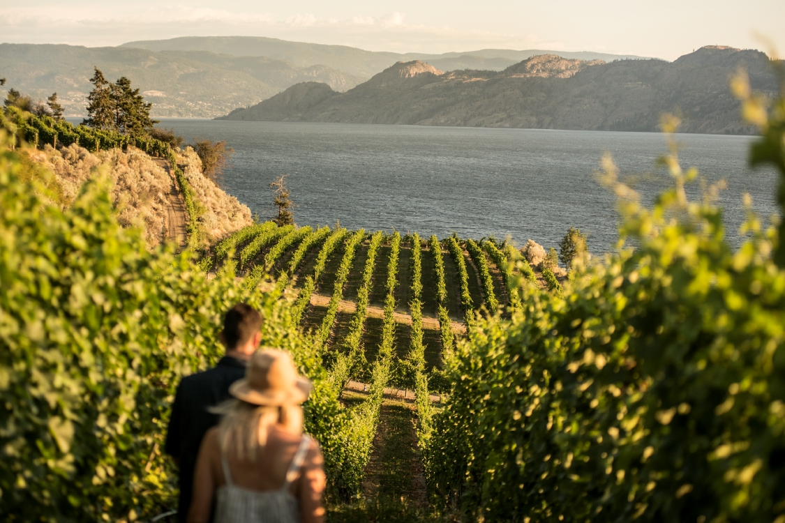 Okanagan Lake bei Evolve Cellars Vineyard, BC