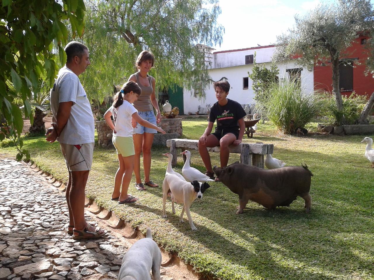 Casas con encanto casa rural sierra de sevilla el casta o el pedroso - Casa rural los castanos ...