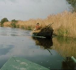 Im Boot durch's Schilf
