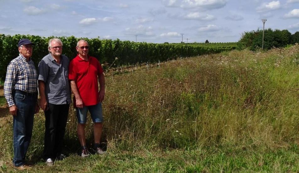 Einsatz für Vielfalt in der Agrarlandschaft: Rolf Schmitt, Gerhard Wisser, Dieter Bischofberger vom NABU Landau-Land
