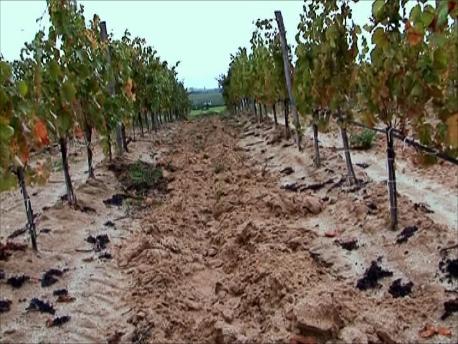 土壌の違い、標高の違い、地形の違いを最適に組み合わせて葡萄を育てる