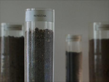 どこの土壌にどの品種が最適か