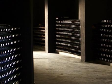 丘陵地中に広がる天然のワインセラー