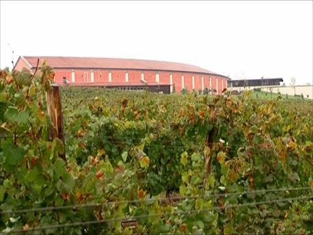 カタルジーナ建屋の周りの葡萄畑