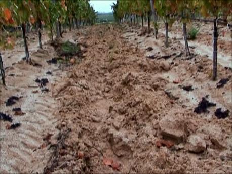 荒れた土壌も葡萄に適している