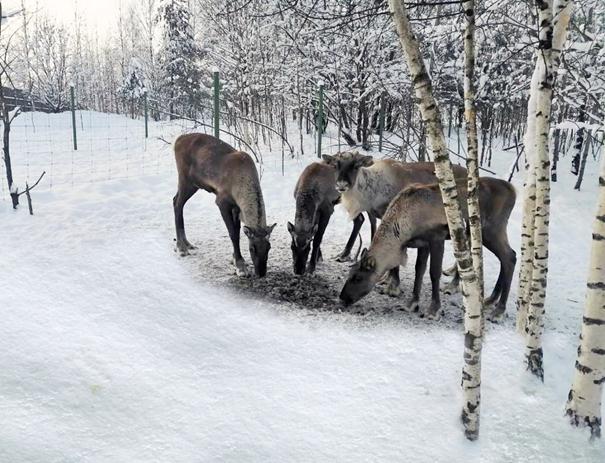 Flying reindeer, off season. Image: AirBridgeCargo