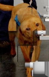 The filter is then presented for analysis and detection by specially and highly trained dogs  /  source: ICTS Europe