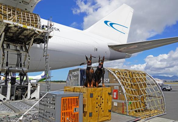 Flying the Gods – err, Dogs! Image: Pacific Air Cargo