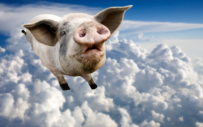 Pigs DO fly! Image: Wonderopolis