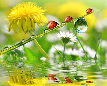 Symbols for a sound environment: flowers and ladybugs  - photo: de.123rf.com