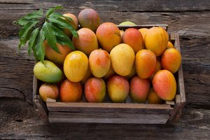 Dachser Mexico Keeps Mango Exports Flowing to Europe  -  Image: Dachser